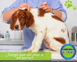 ¿Tengo que vacunar a mi perro?